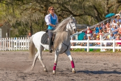 Lipizzan Stallions - Myakka City, Florida