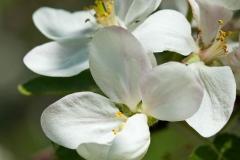 Marie Selby Botanical Garden - Sarasota, Florida