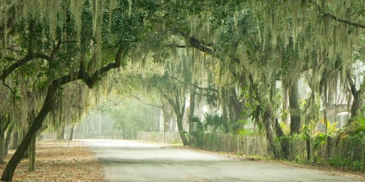 Canopy Road - Sarasota, Florida